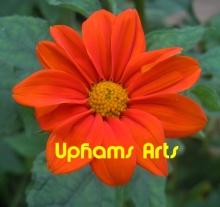 Uphams Arts Fine Arts Store